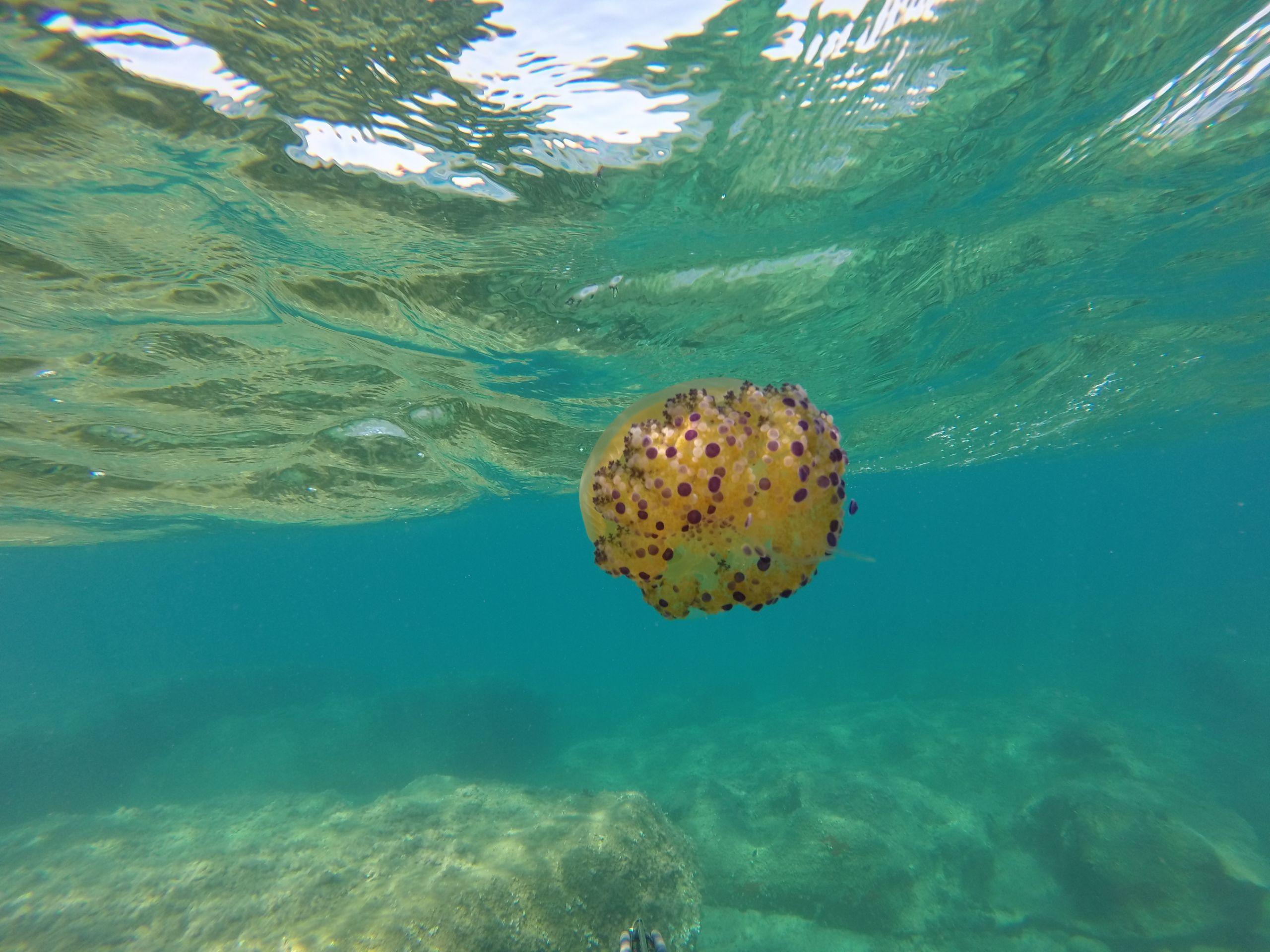 1 anno di Pescasub: Calabria Wild